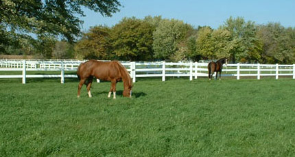 At Town & Country Turf, we spacialize in Horse Pasture Management and Maintenance for the health and well being of your treasured horses.