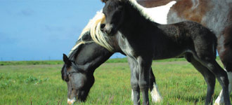 Town & Country Turf specializes in Horse Pasture Management services to maximize healthy, production pasture land.